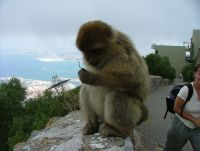 Highlight for Album: Gibraltar, July 2004
